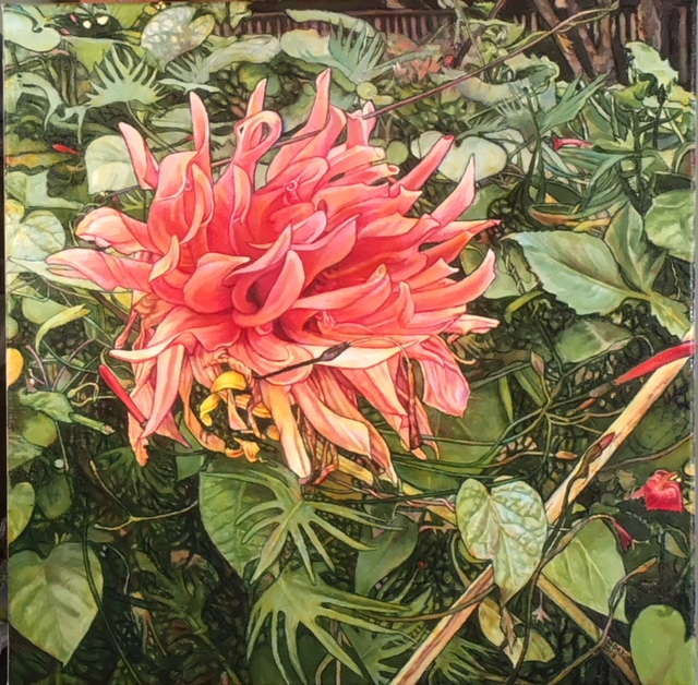 "Dahlia #4, oil on canvas, 20""x20"", $1,200.00"
