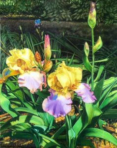 "Irises, oil on canvas, 16""x20"", $1,100.00"